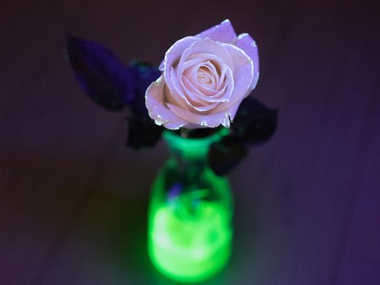 science-projects-kids-kiwi-crate-glow-in-the-dark-flower