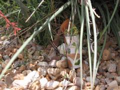 Nature Hide and Seek Game