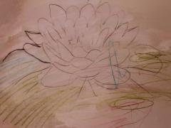 Water Lily Watercolor Pencil Picture