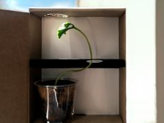 Plant Light Maze