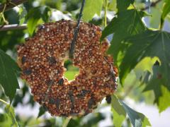 Easy Bagel Bird Feeders