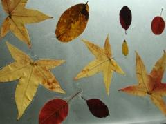 Leaves + Contact Paper = Fall Placemats
