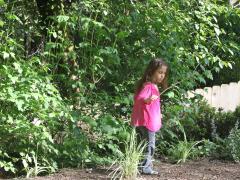 Nature Findings Butterflies