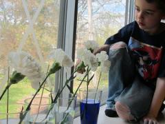 Carnations + Food Coloring = Rainbow Flowers