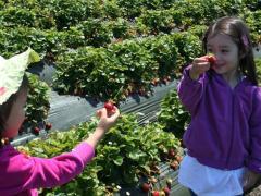Strawberry Picking & Basket Weaving