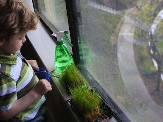 seed-sponge-kindness-creative-DIY-Kiwi-Crate-kids