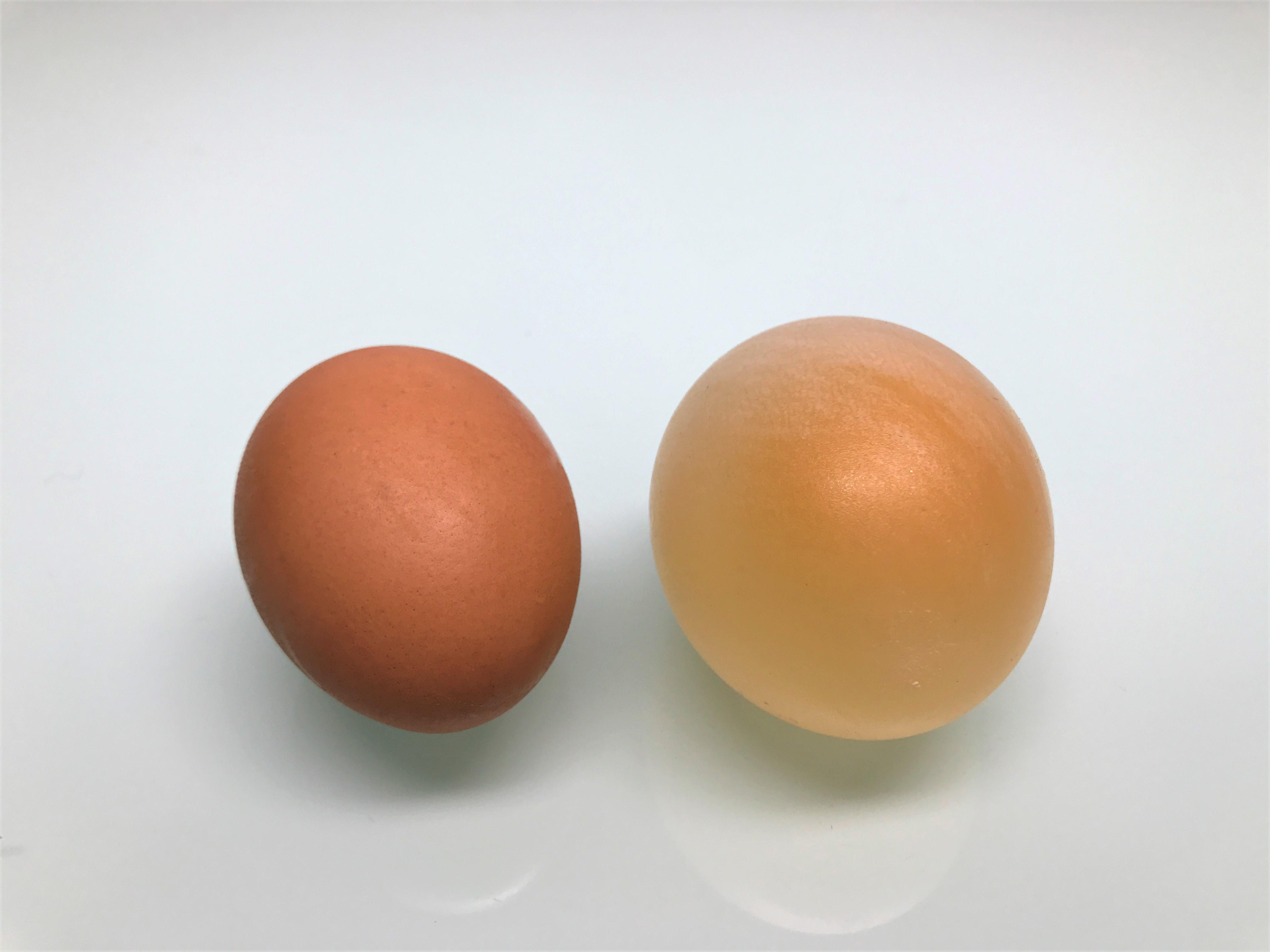 Eggshell in Vinegar Experiment - ScienceWorks